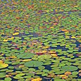 Land of Lillypads